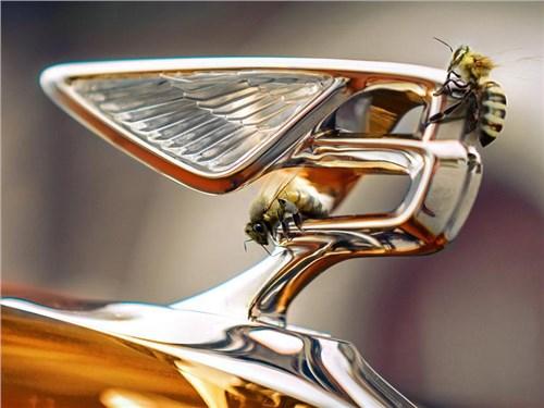 Новость про Bentley - Bentley начнет выпускать мёд