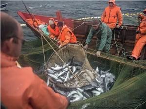 Рыбы в Охотском море видимо-невидимо