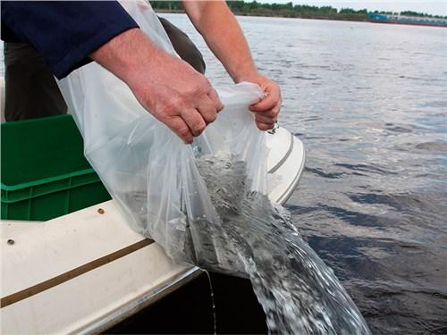 Представители «Автодора» рассказали, как компания заселяет рыбой водоемы и сажает деревья