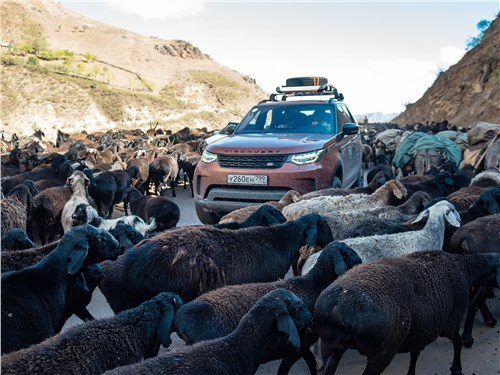 Стада овец осенью гонят с гор в долину по дорогам общего пользования