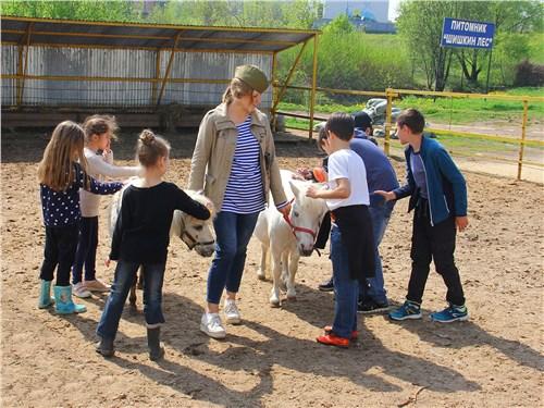 Мини-лошадки с радостью общаются с детьми