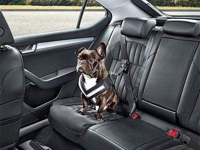 Skoda представляет набор специальных устройств для перевозки собак в машине