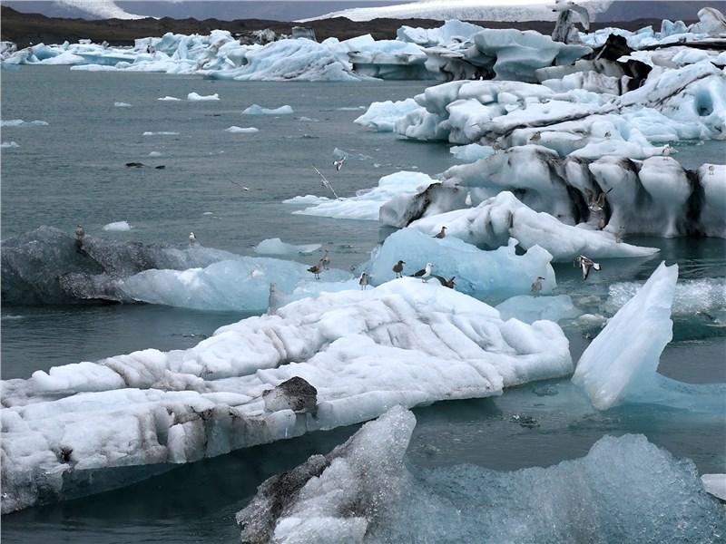 Ледники местами спускаются прямо к океану, привлекая стаи птиц и морских котиков