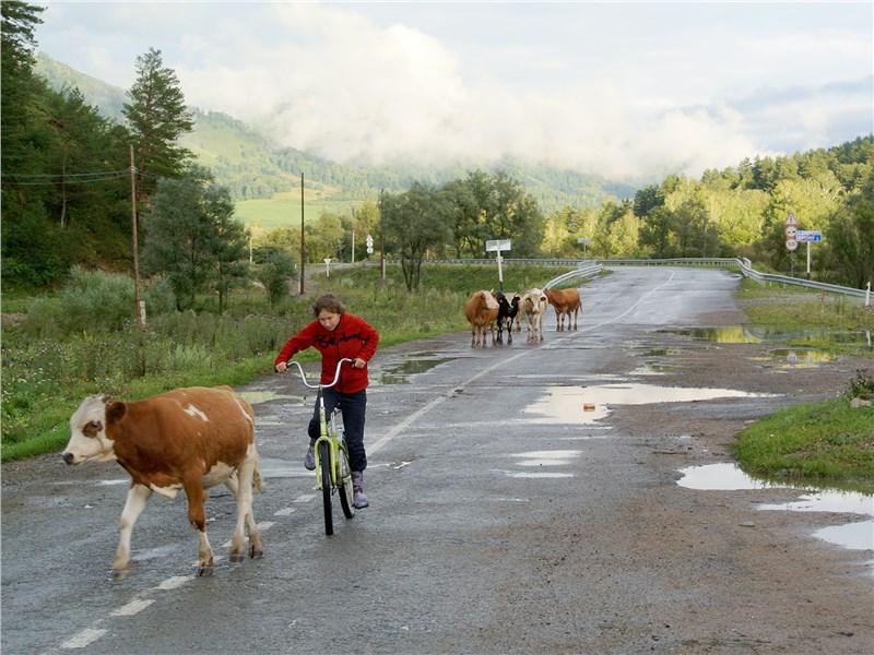 Точный руль, драйверское шасси и цепкие тормоза Skoda Kodiaq минимизировали риск при встрече с пасущимися на асфальте коровами