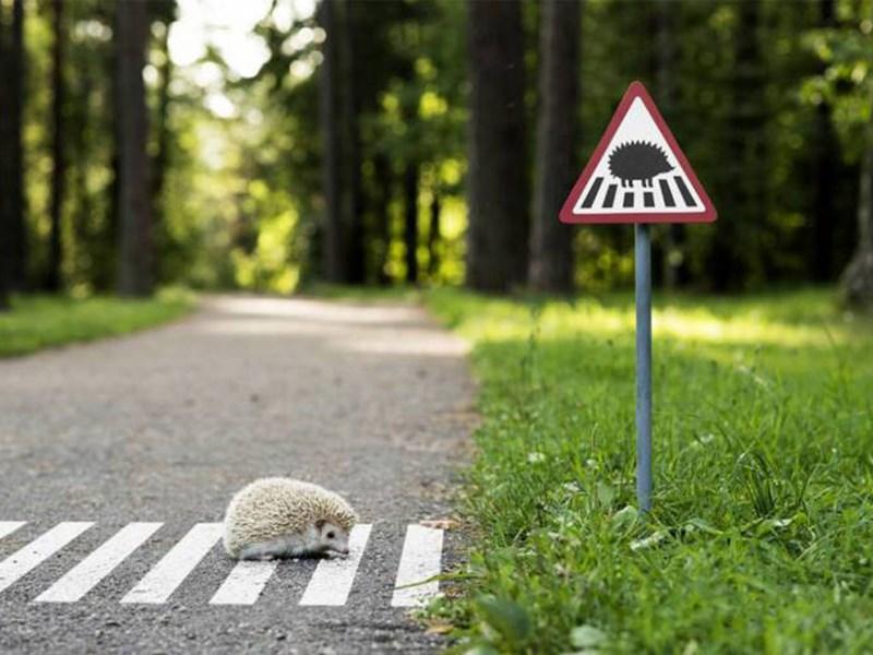 В Великобритании вводят дорожный знак «Осторожно Фото Авто Коломна