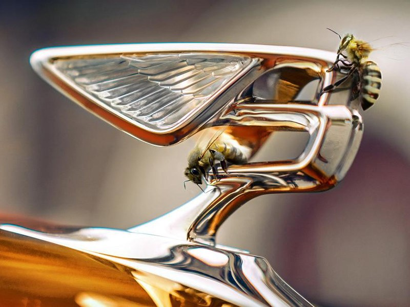 Bentley начнет выпускать мёд