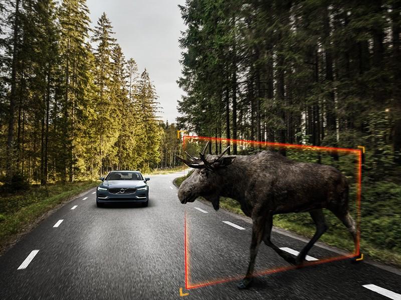 Компания Volvo разработала систему распознавания животных на дороге