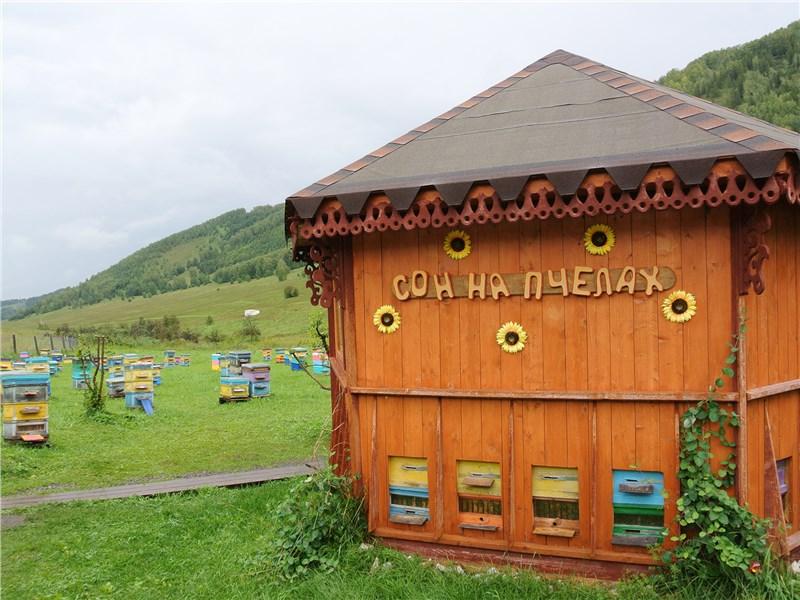 На пасеке оказывают услуги оздоровительного характера. Абсолютный хит – сеанс «Сна на пчелах»