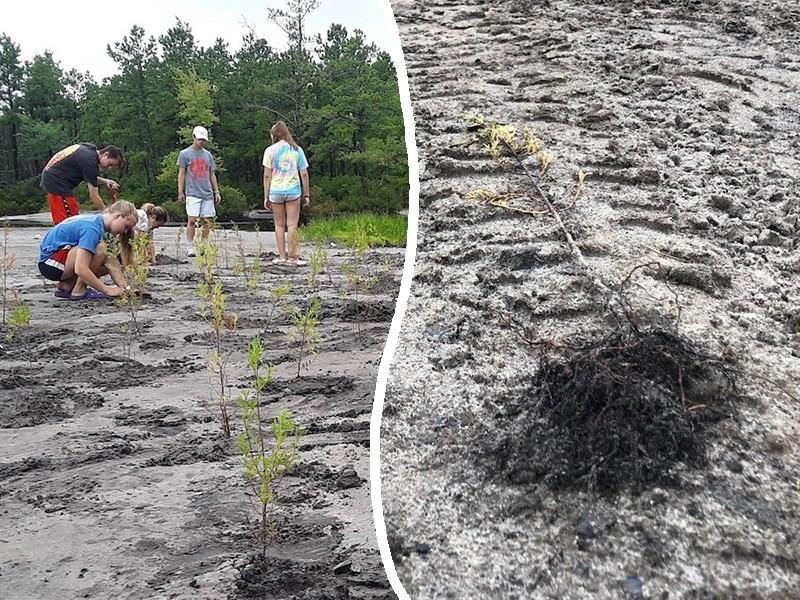 Джиперы уничтожают деревья