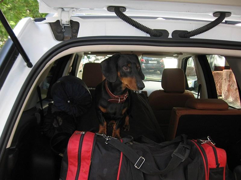 Land Rover Freelander 2 2011 багажное отделение