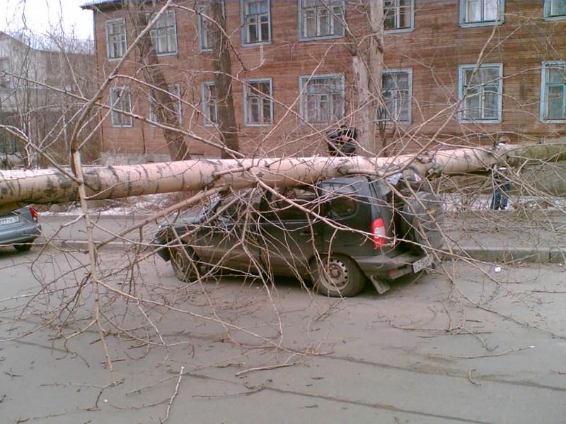 В Питере деревья падают на машины
